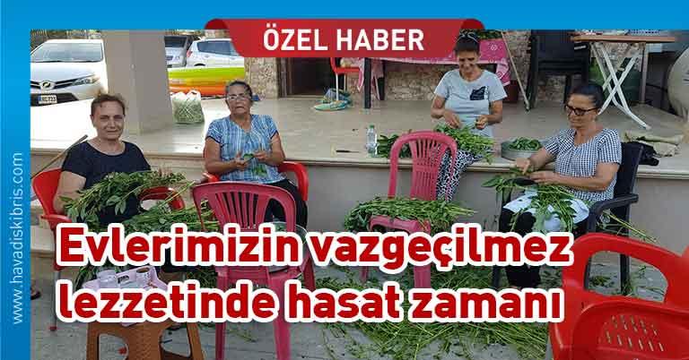 Molehiya, hasat zamanı, Gemikonağı, Ziya Emirzade, Kıbrıs sofraları,