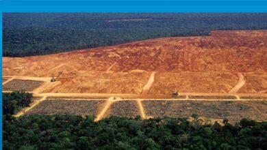 Photo of Amazon'daki ormansızlaşma bir yılda yüzde 25 arttı