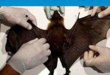 Photo of BM'den vahşi yaşamı sömürülmeye devam etmesi halinde salgın hastalıkların artacağı uyarısı