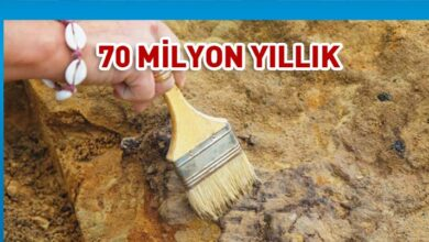 Photo of Arjantin'de bulunan balık fosilinin 70 milyon yıllık olduğu keşfedildi