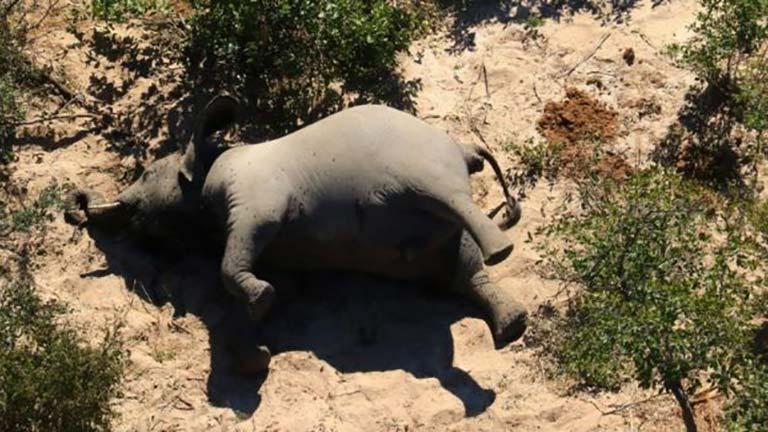 Botsvana fil