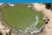 Photo of Botsvana'da toplam 350 fil gizemli bir şekilde öldü