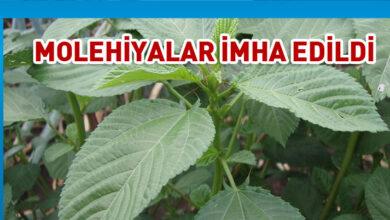 Photo of İthal ve yerli 5'er üründe limit üstü ilaç