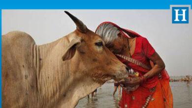 Photo of Hindistan'da Müslüman genç, inek eti taşıdığı iddiasıyla linç edildi