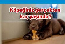 Photo of Yeni araştırma! Köpeğiniz gerçekten kaç yaşında