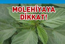 Photo of Tarım Dairesi'nden molehiya uyarısı