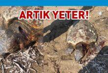 Photo of Kıyılarımızda 6. kurban