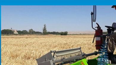 Photo of Ülke koşullarına uygun arpa çeşidi 2022'de çiftçiye arz edilecek