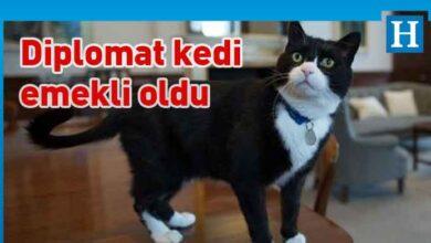Photo of Diplomat kedi Palmerston İngiltere Dışişleri Bakanlığı'ndan emekli oldu