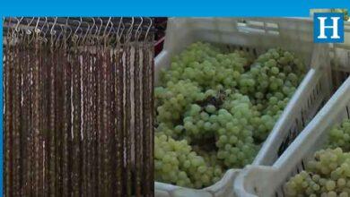 Photo of Mehmetcik'te hasatla birlikte üzüm sucuğu yapımına başlandı