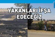 Photo of 10 yıl önce ekilen selviler yandı