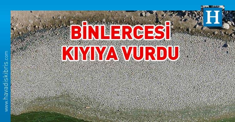 Bursa'da balık ölümleri