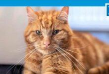 Photo of Garfield eski sahiplerini bulmak için 65 kilometre yolculuk yaptı