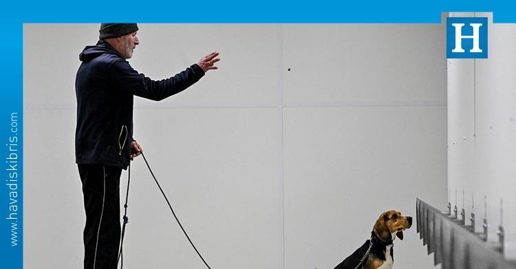 köpekler pcr testinden 1 hafta önce koronayı tespit edebiliyor
