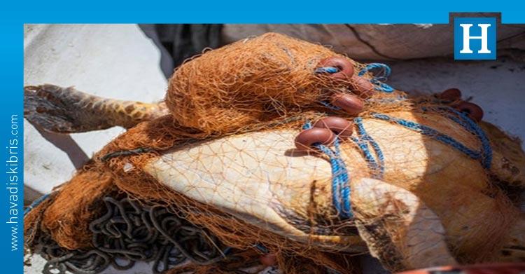 Kuzey Kıbrıs Kaplumbağaları Koruma Cemiyeti