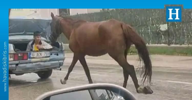 otomobilin bagajından atı iple çekti
